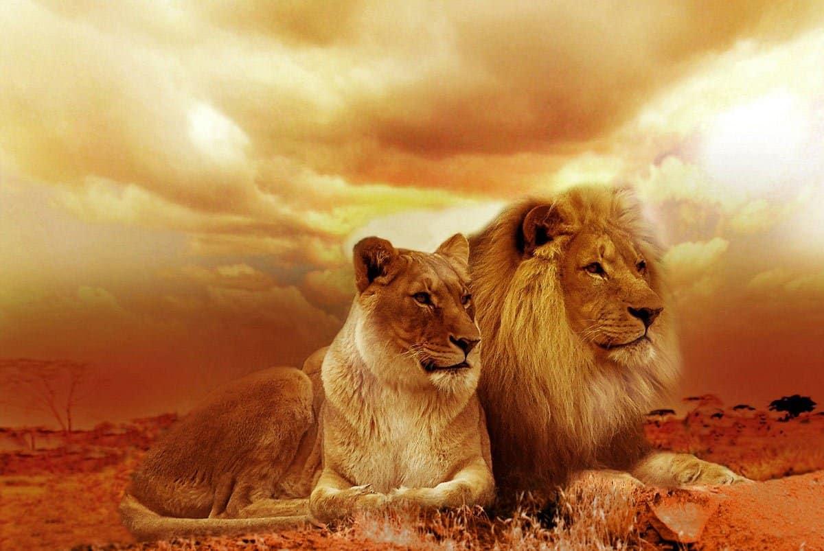 Lions Gateway Portal